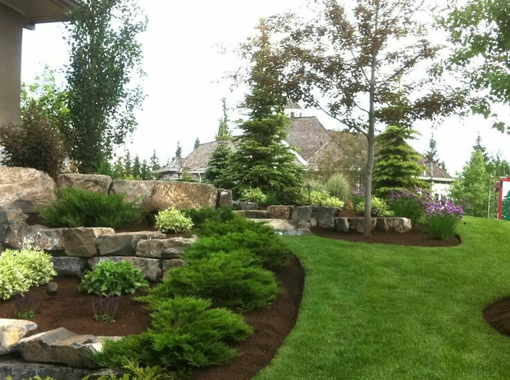 Evergreen garden design ideas
