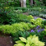 Garden design ideas shade