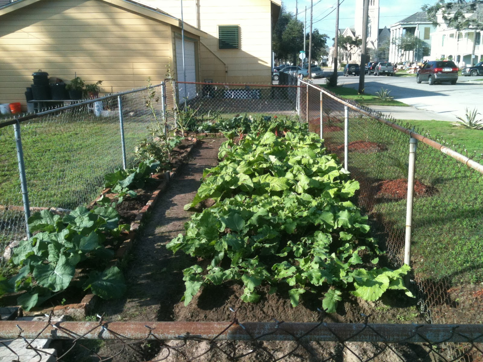 Urban vegetable gardening