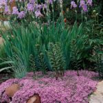 What are good plants for rock gardens