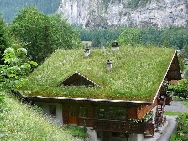 Eco House Grass Roof photo - 3