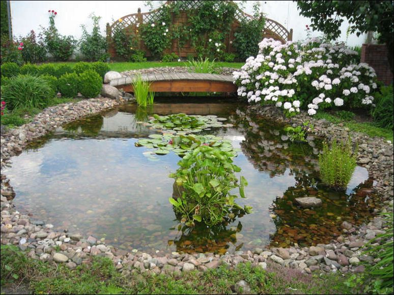 Garden Pond Inspiration photo - 1