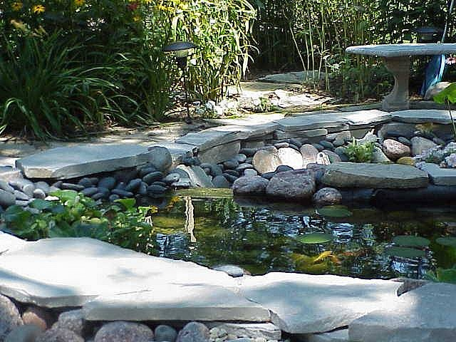 Garden Pond Inspiration photo - 4
