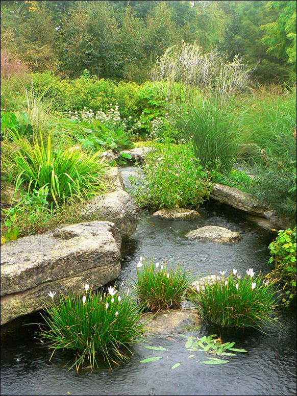 Garden Pond Inspiration photo - 6