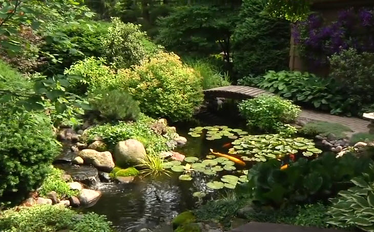 Garden Pond Inspiration photo - 7