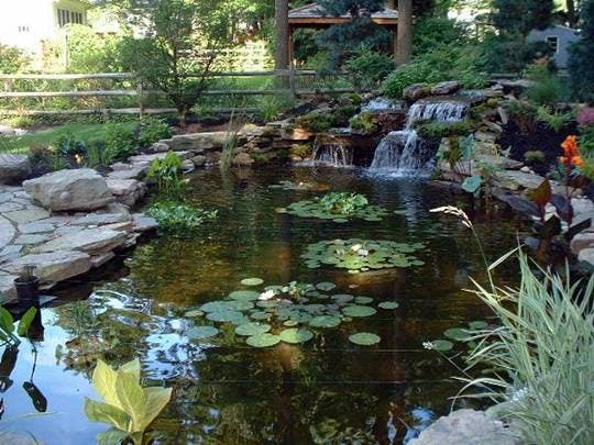 Garden Pond Inspiration photo - 8