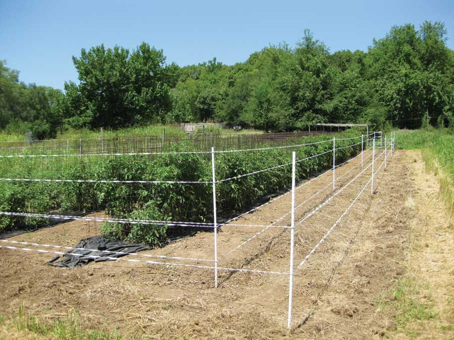 fencing ideas to keep deer out photo - 2
