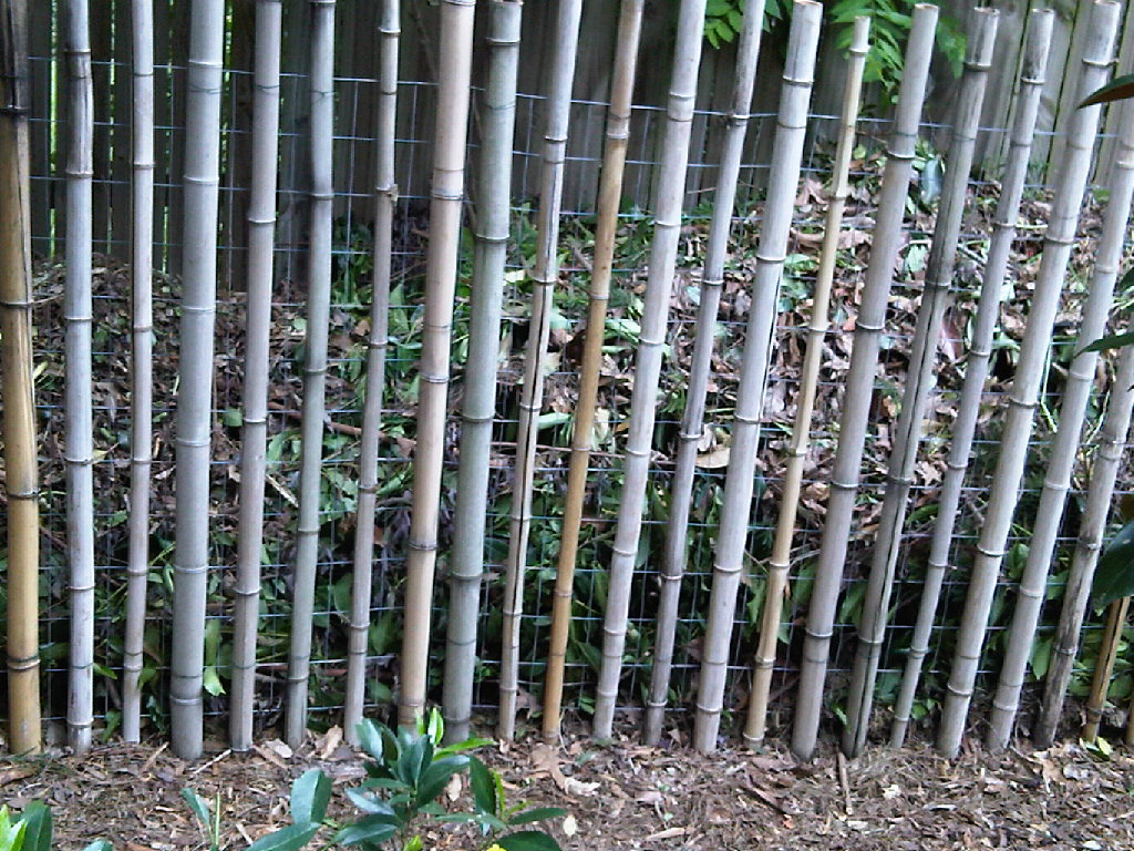 garden bamboo fencing ideas photo - 3
