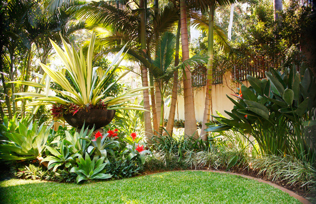 garden design and ideas tropical photo - 1