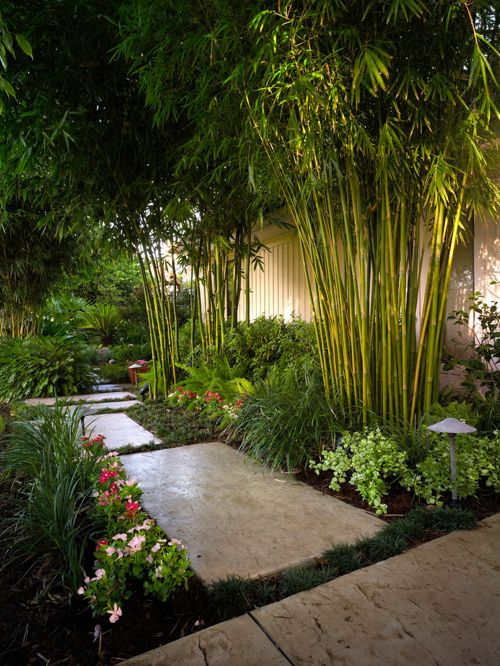 garden design and ideas tropical photo - 3