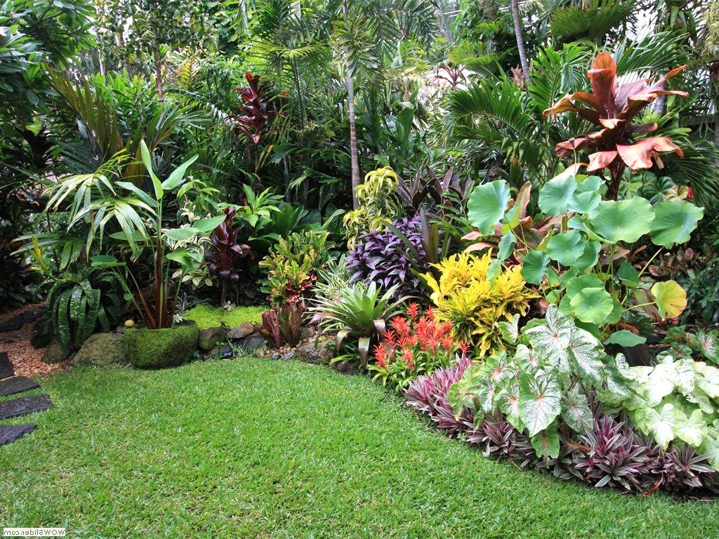 garden design and ideas tropical photo - 8