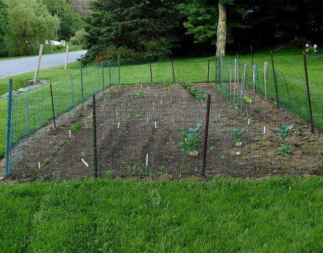 garden fence ideas for rabbits photo - 3