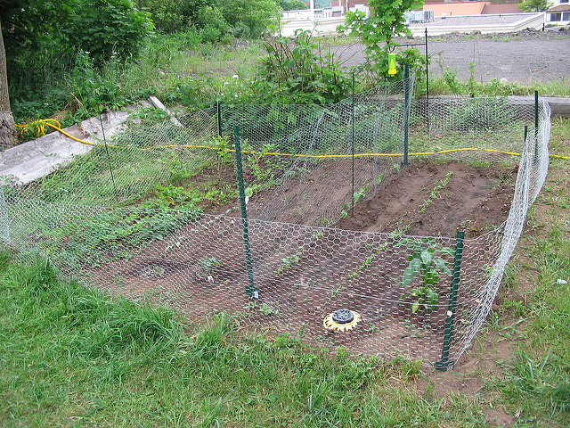 garden fence ideas for rabbits photo - 6