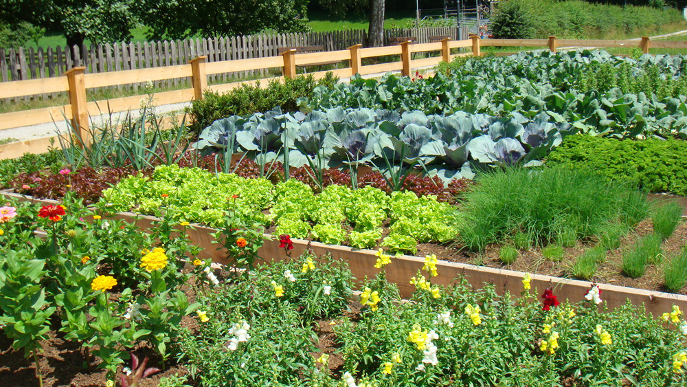 large vegetable garden design photo - 2