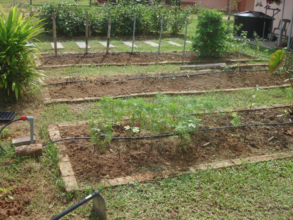 large vegetable garden design photo - 4