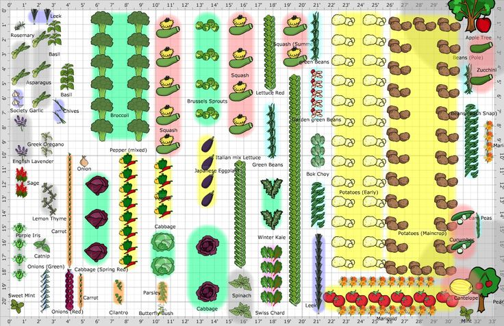 large vegetable garden design photo - 6
