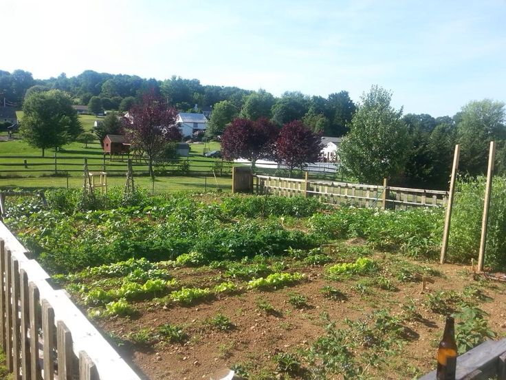 large vegetable garden design photo - 8