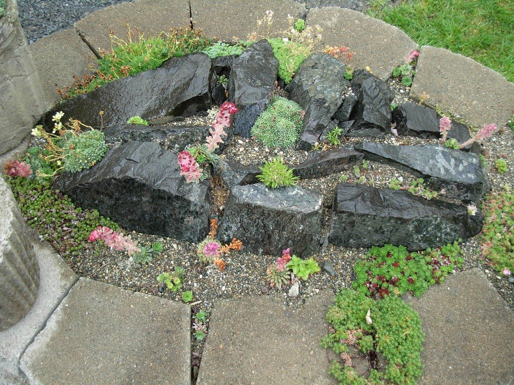 plants for rock gardens photo - 4