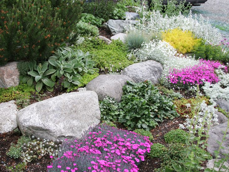 plants for rock gardens photo - 7