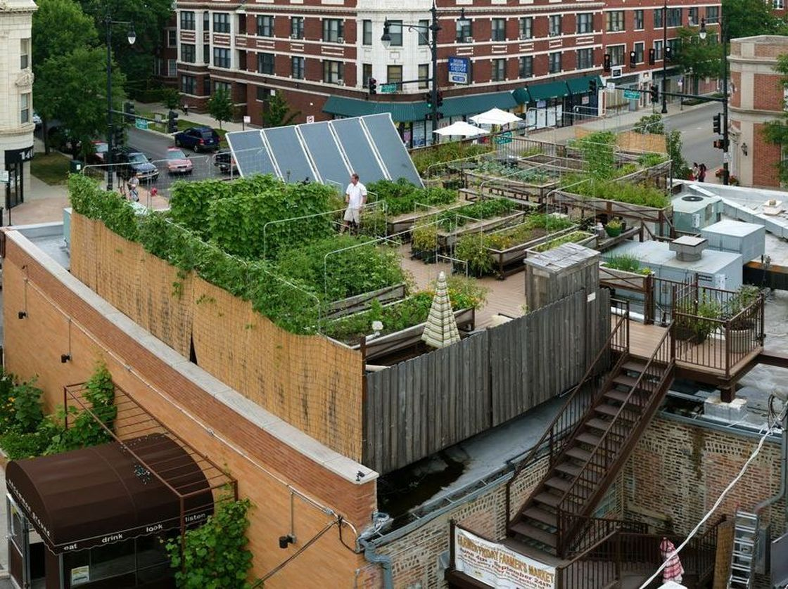 roof top food garden photo - 2