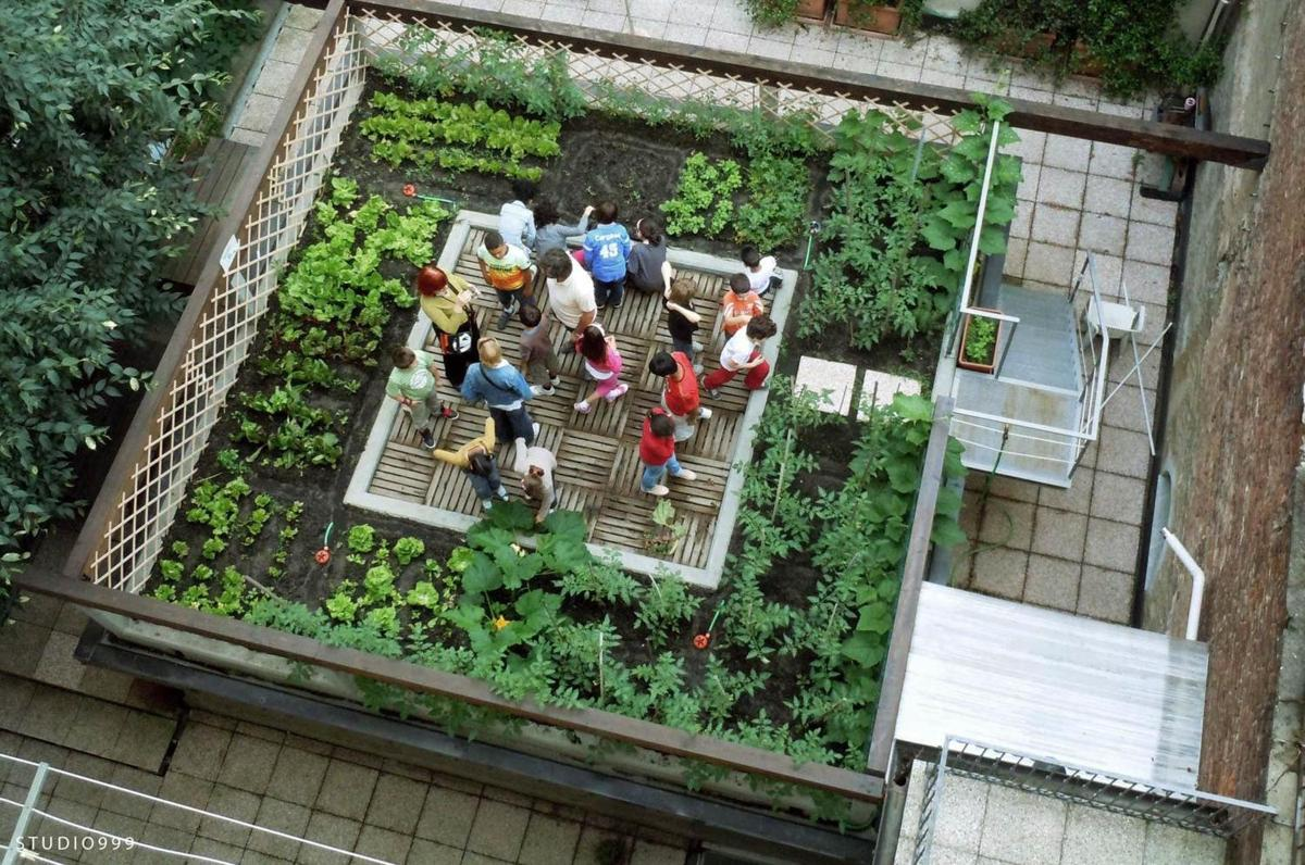 roof top food garden photo - 4