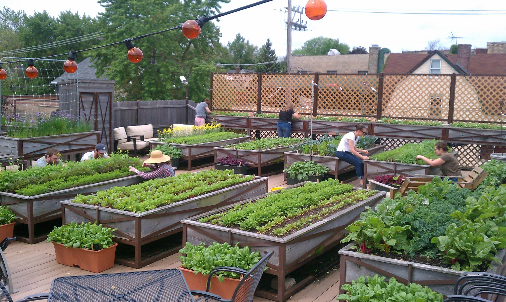 roof top food garden photo - 7