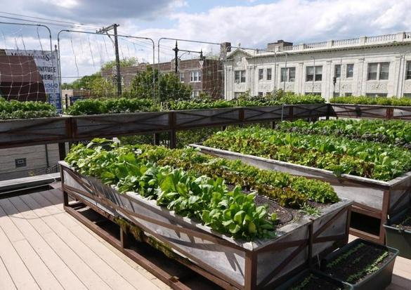 roof top food garden photo - 8