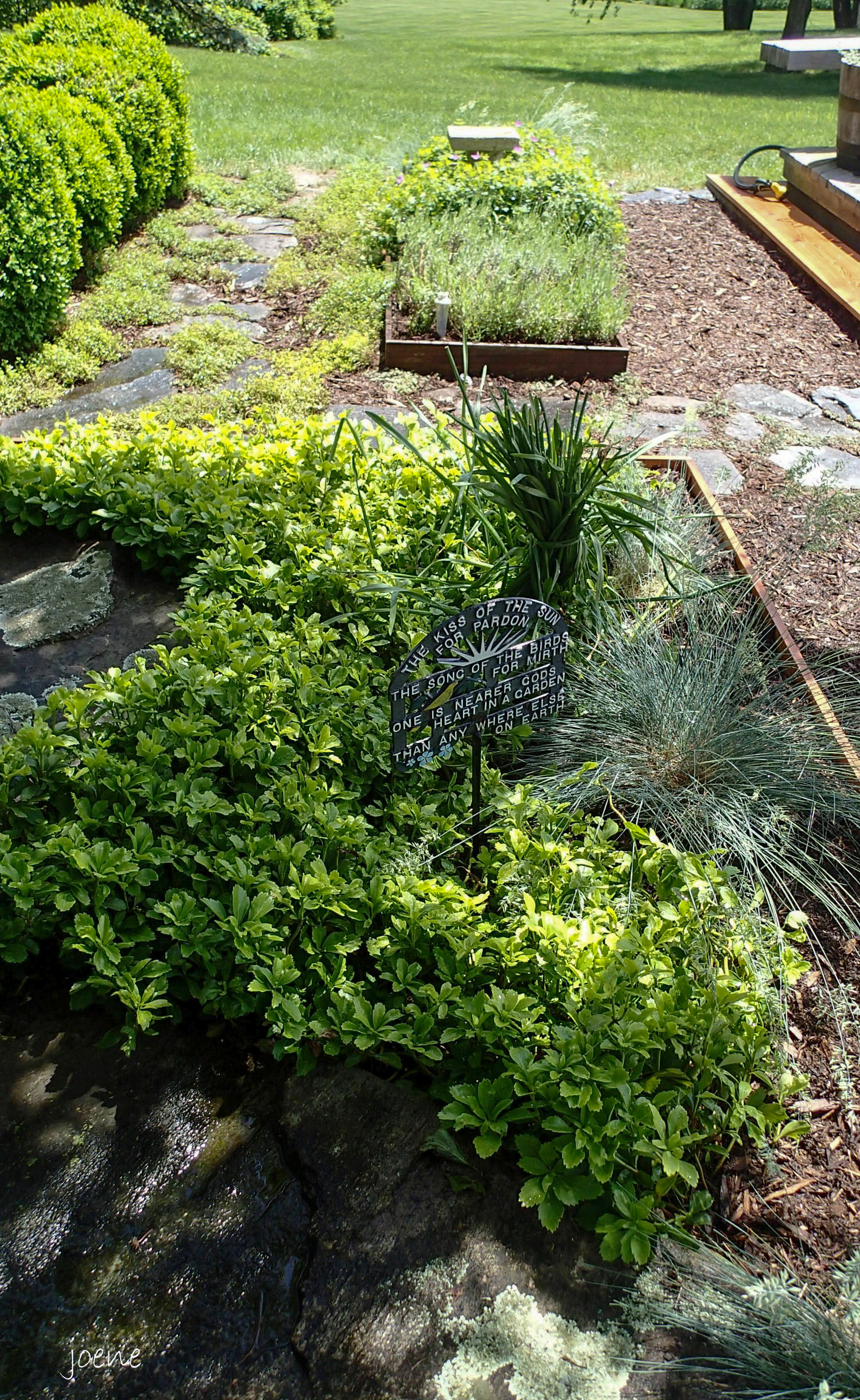 small easy herb garden photo - 3
