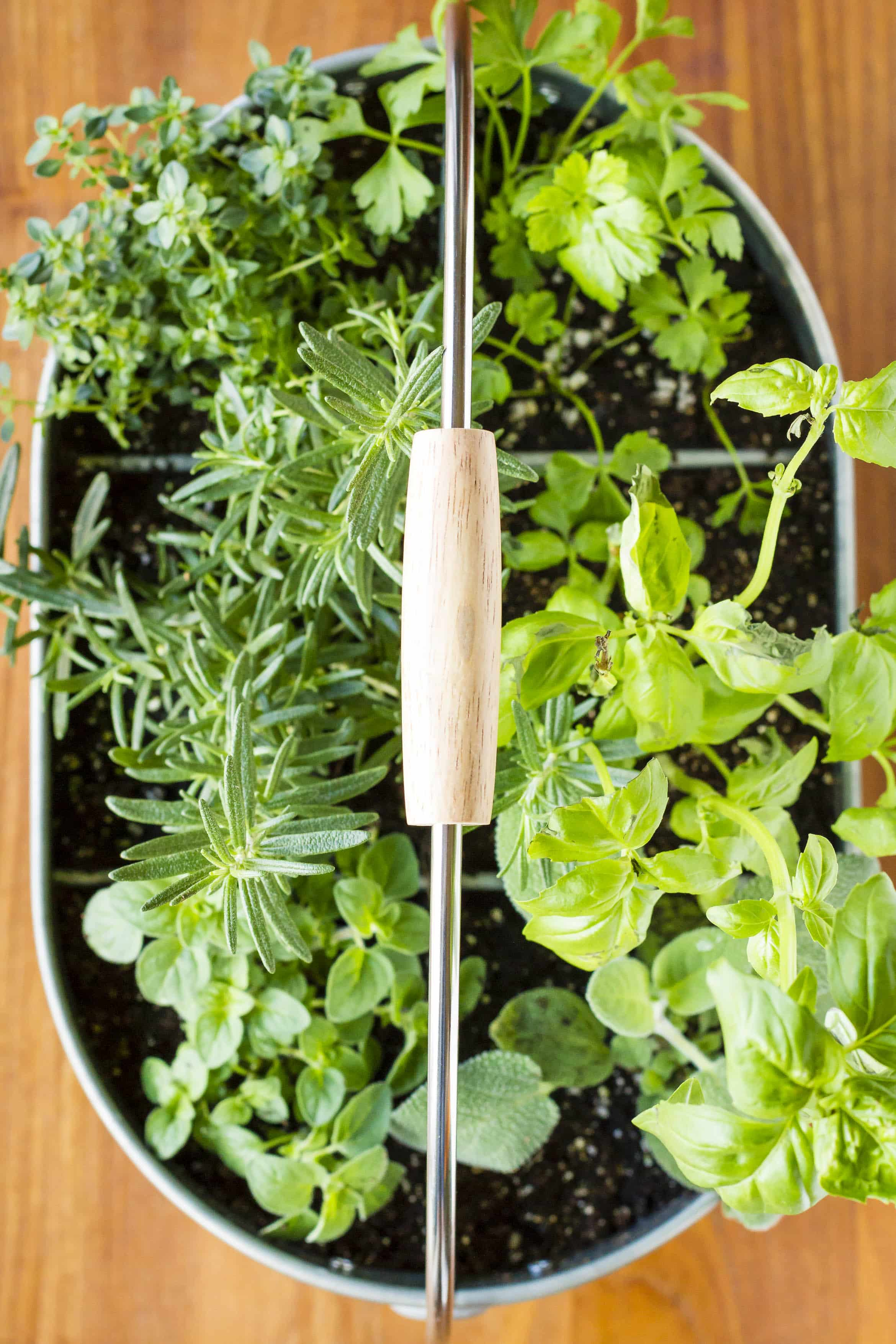 small easy herb garden photo - 4