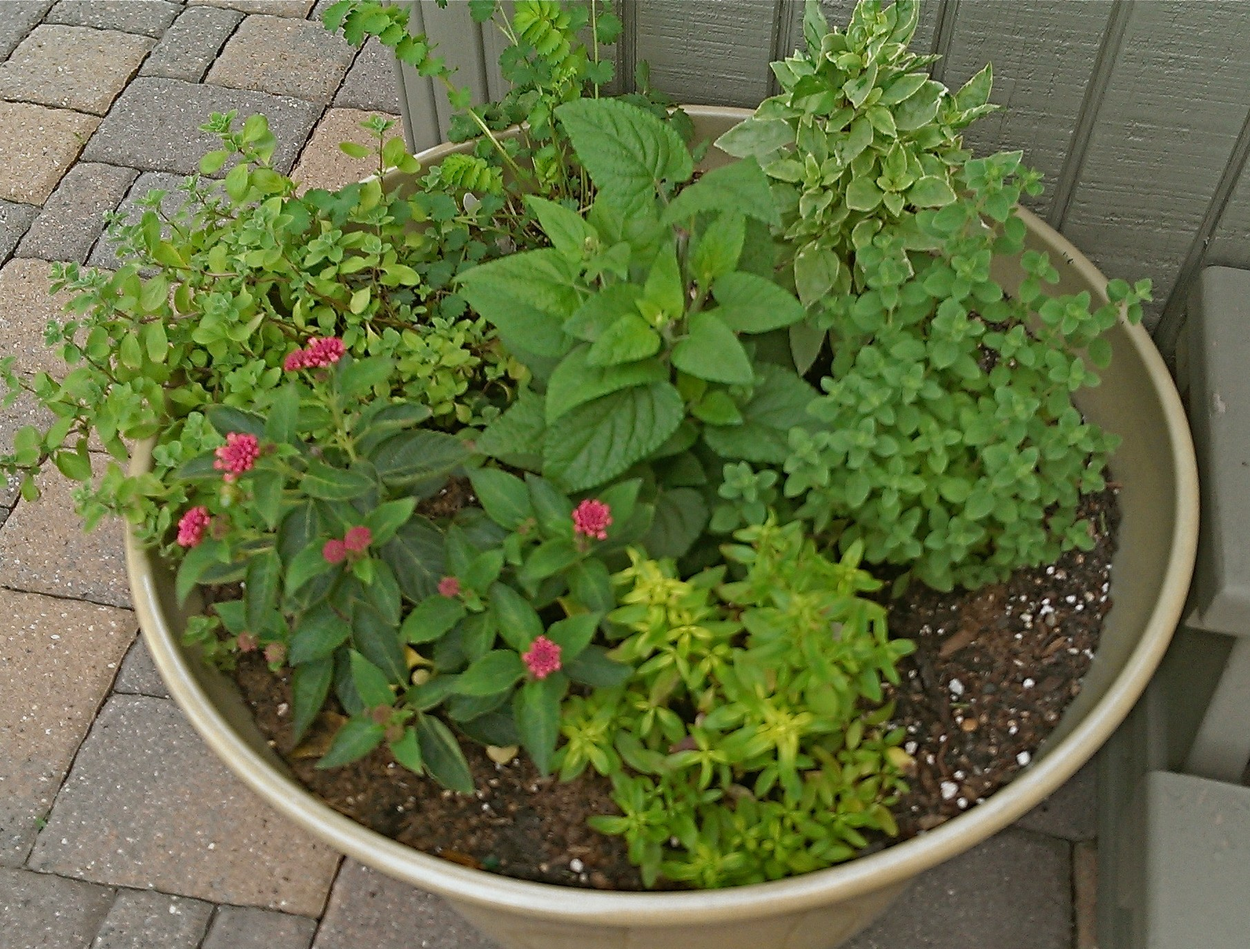 small easy herb garden photo - 5