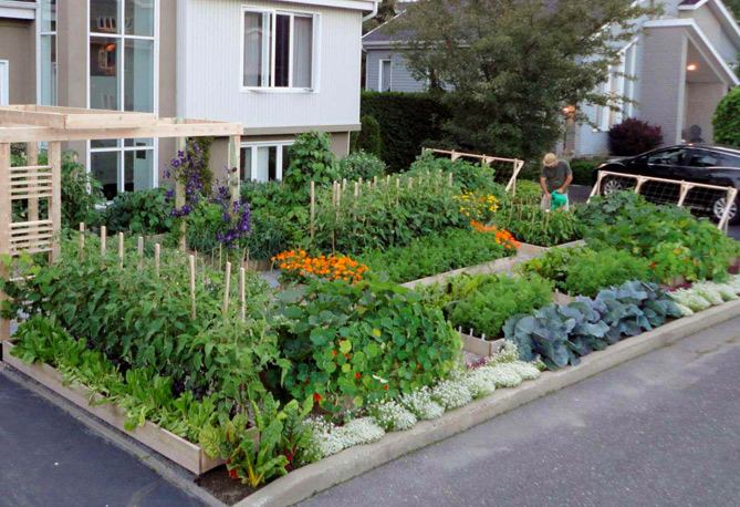 urban vegetable gardening photo - 4