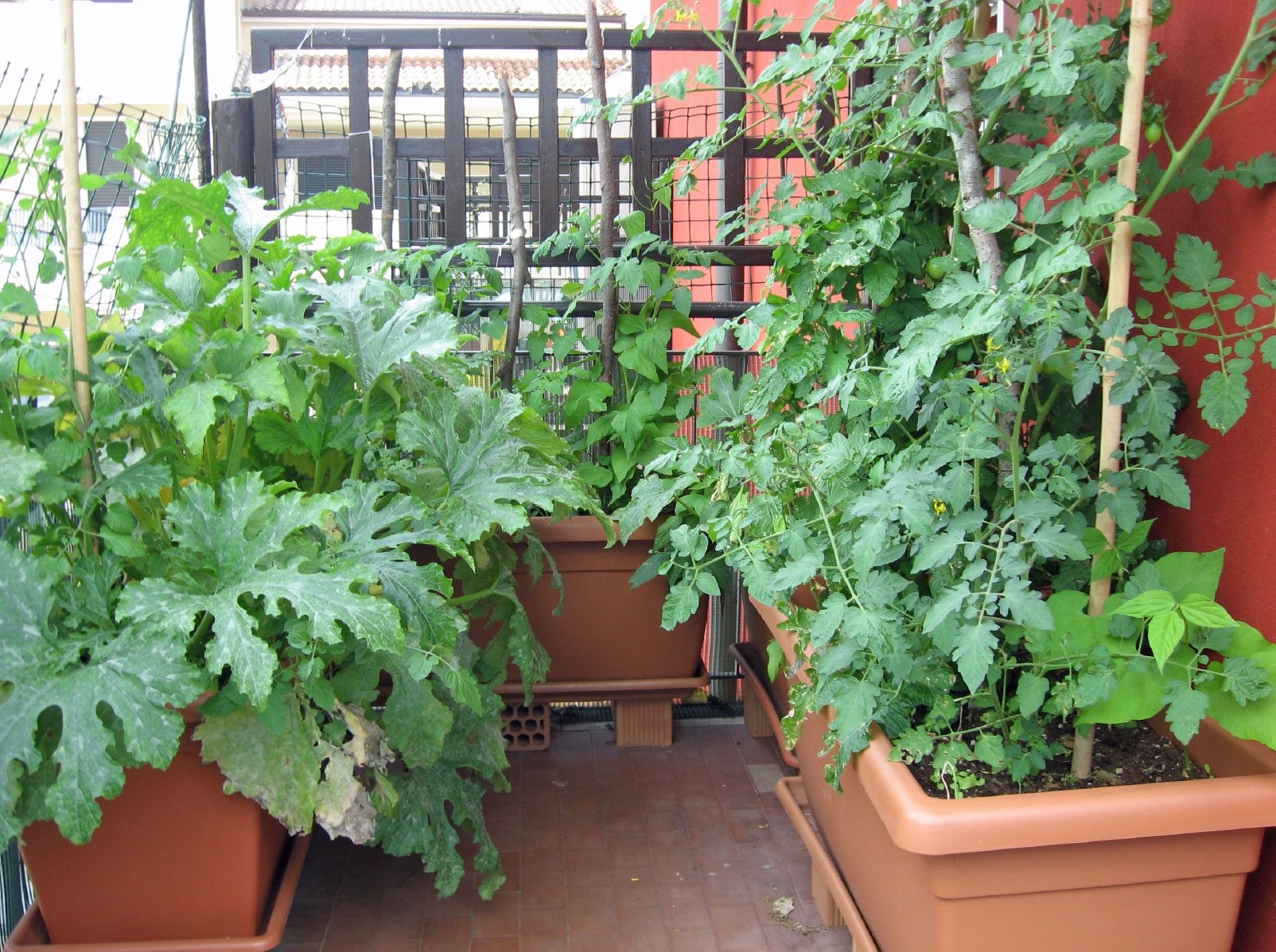 urban vegetable gardening photo - 6