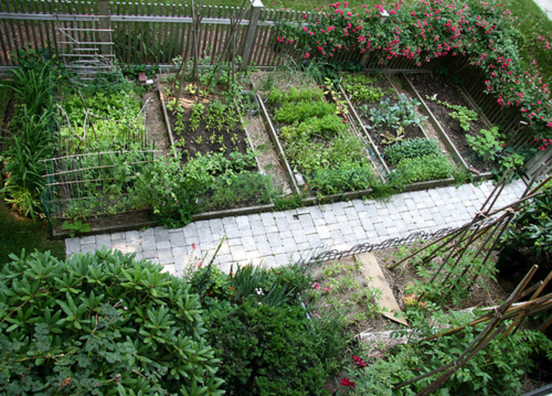 vegetable garden blueprints photo - 3