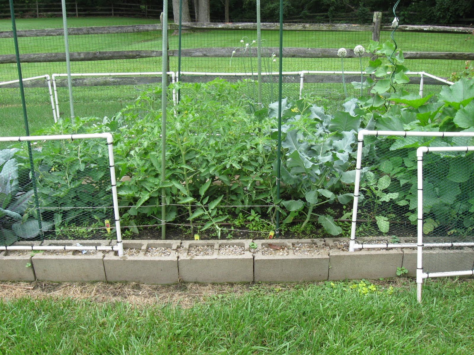 vegetable garden fence panels photo - 10