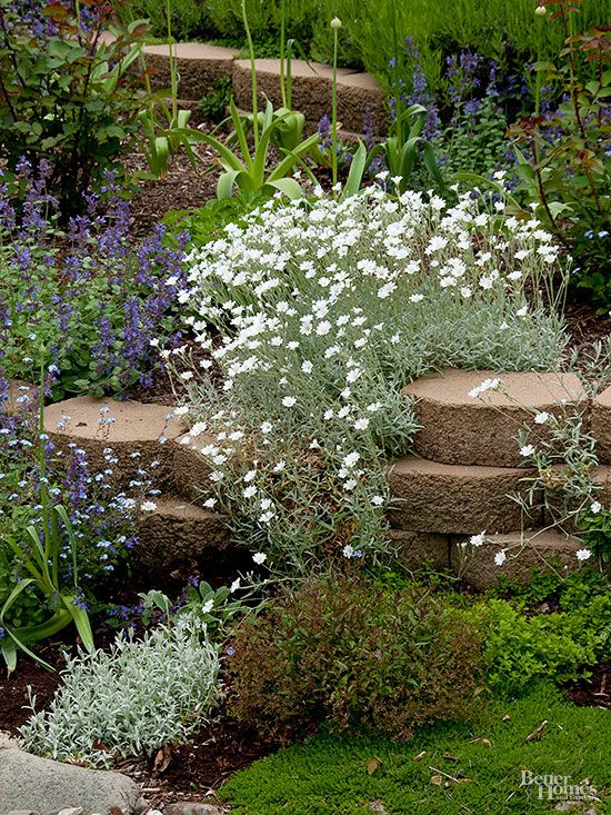 what are good plants for rock gardens photo - 10