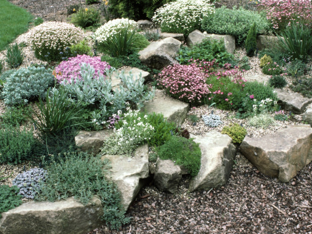 what are good plants for rock gardens photo - 2