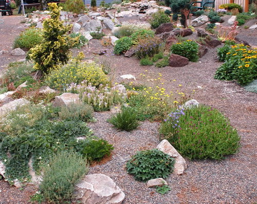 what are good plants for rock gardens photo - 3