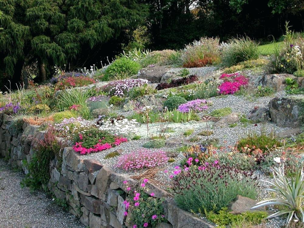 what are good plants for rock gardens photo - 5