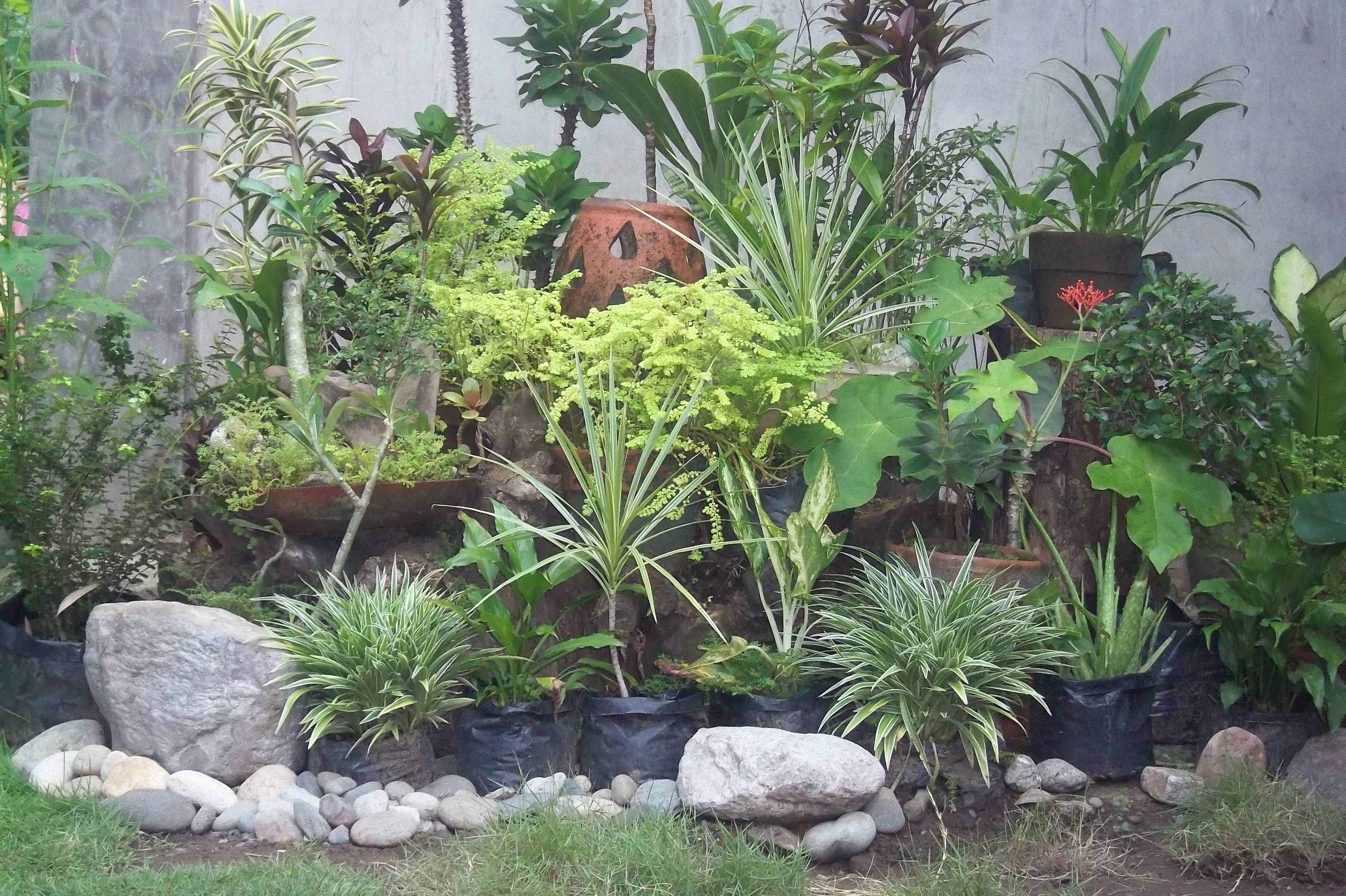 what are good plants for rock gardens photo - 6