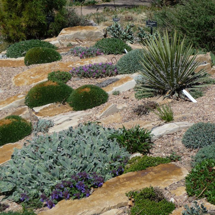what are good plants for rock gardens photo - 8